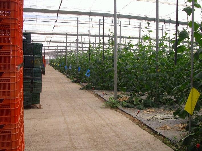 Agricultura ecológica bajo plástico, en el ojo del huracán