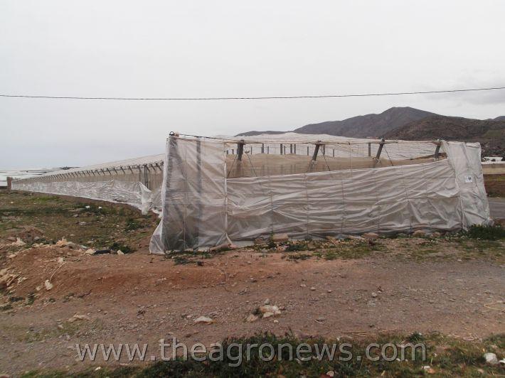 Inventan un invernadero dentro de otro invernadero / They invent a greenhouse within another greenhouse