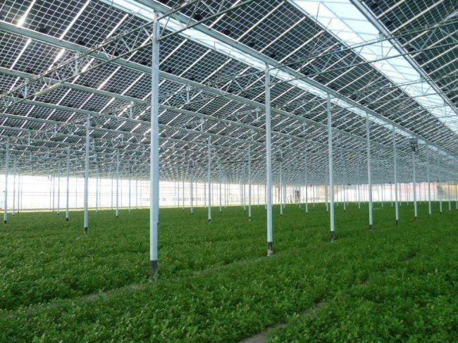 Fotovoltaica para el invernadero y eólica para la comunidad de regantes
