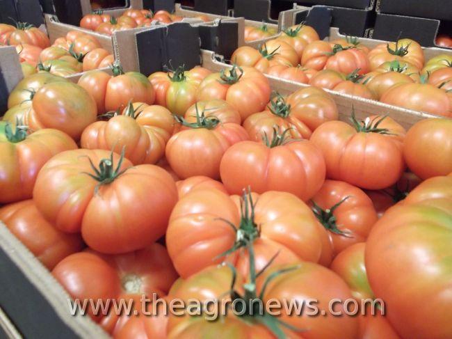 El sabor del tomate, ¿de qué depende?