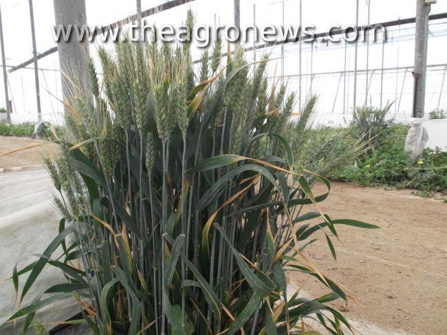 Plantas refugio, donde habitan los bichos buenos / Shelter plants, where good bugs live