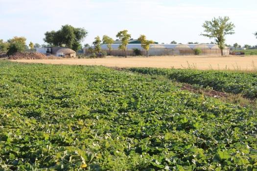 invernadero en Los Llanos