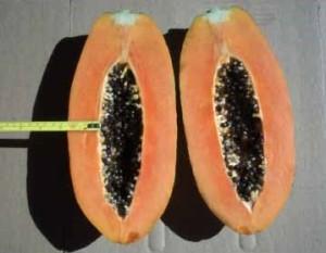 papaya fruto