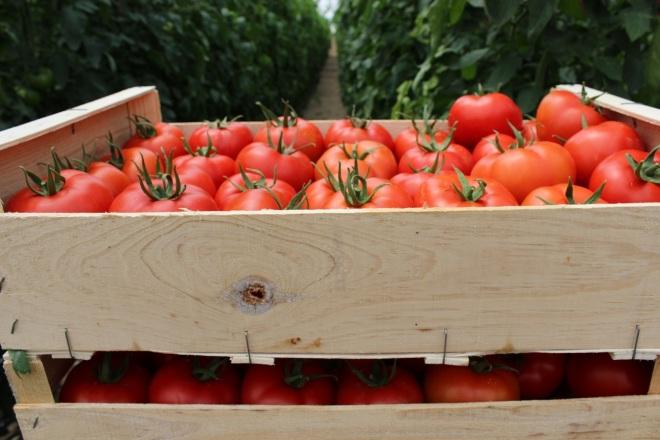 tomate en caja de madera