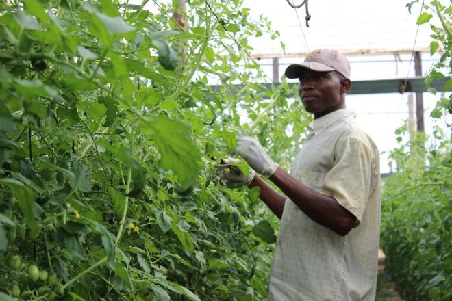 trabajador subsahariano