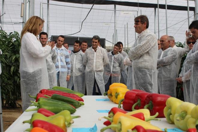6.- María Luisa en la finca experimental de pimiento