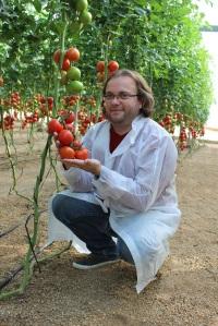 Con tomate precomercial