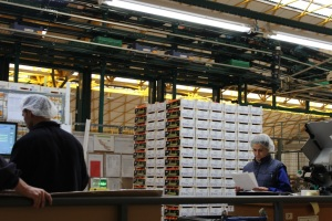 Exportaciones Aranda SL