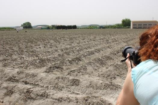 Ana fotografiando un campo de espárragos