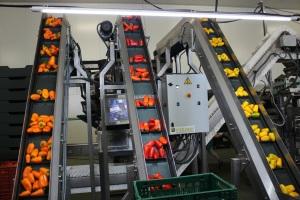 Naranja, rojo y amarillo