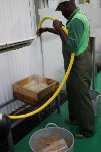 14.- limpiando las semillas