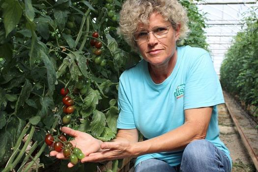 Lola-y-tomates